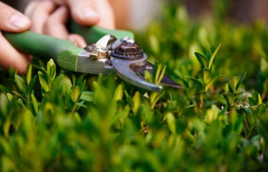 Des paysagistes compétents pour vos travaux de jardinage