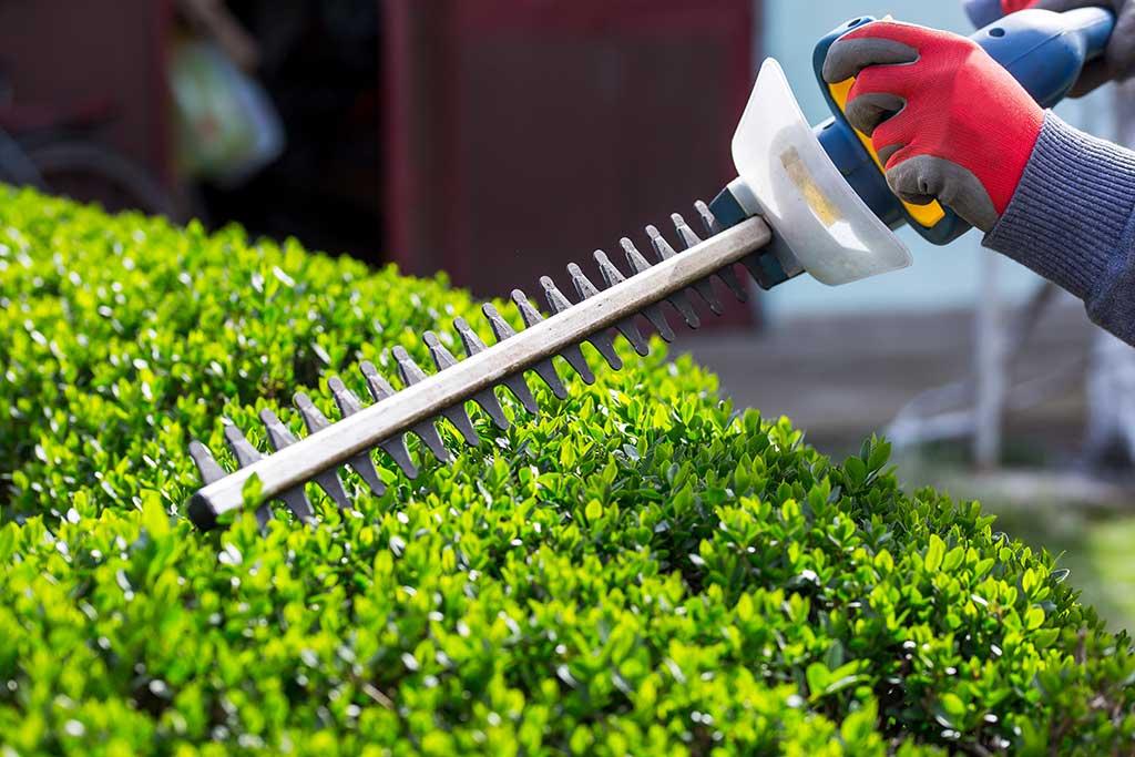élagage entretien de jardin