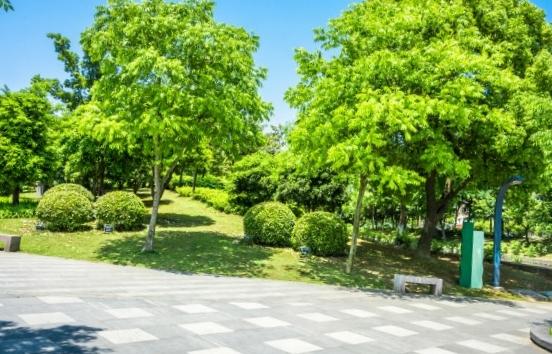 types d'arbres