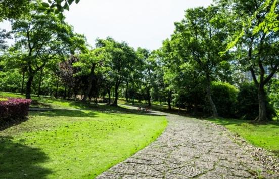 L'élagage d'arbres